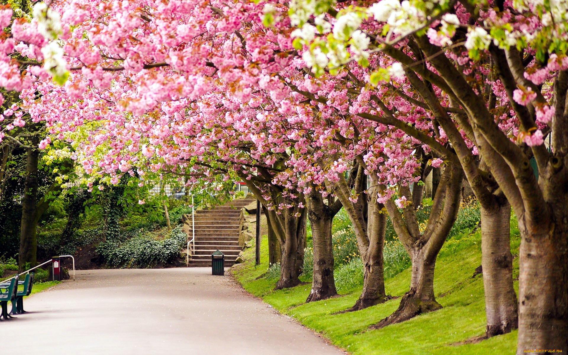 можно бесплатно весна картинки интересные когда про